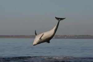 Dolphinnnn_lrge
