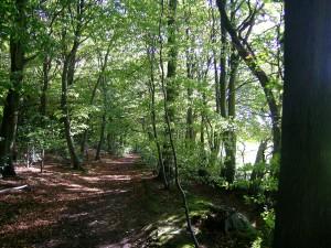 Path_in_Monkton_Wood_Monks_Risborough_lrge